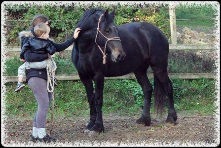 Barock-pferd - Angel Von Conia