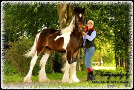 Drumhorse - KING WILLIAM WINGS OF WULCAN