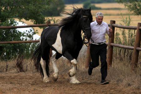 Lancelot (3)