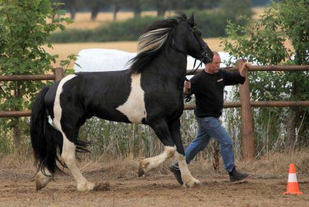 Lancelot (4)