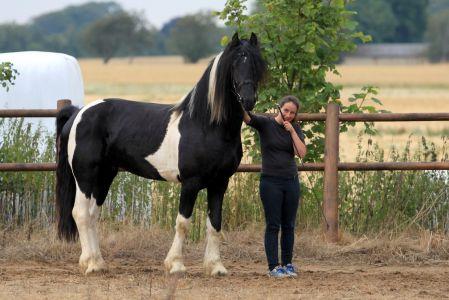 Lancelot (6)