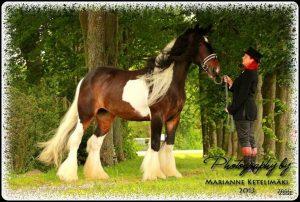 Drumhorse - GORGIE RACKLIE fan KILEWIER