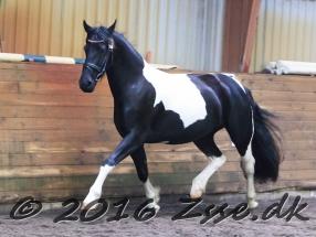 queen-af-baaloe-046